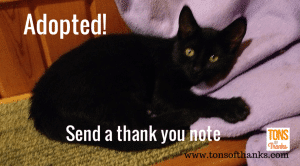 Send thank you note for kitten adoption