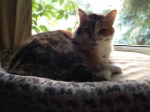 My cat Lina