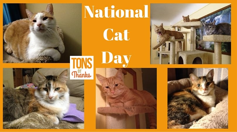 NationalCatDay