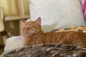 Orange Tabby Cat on a Couch