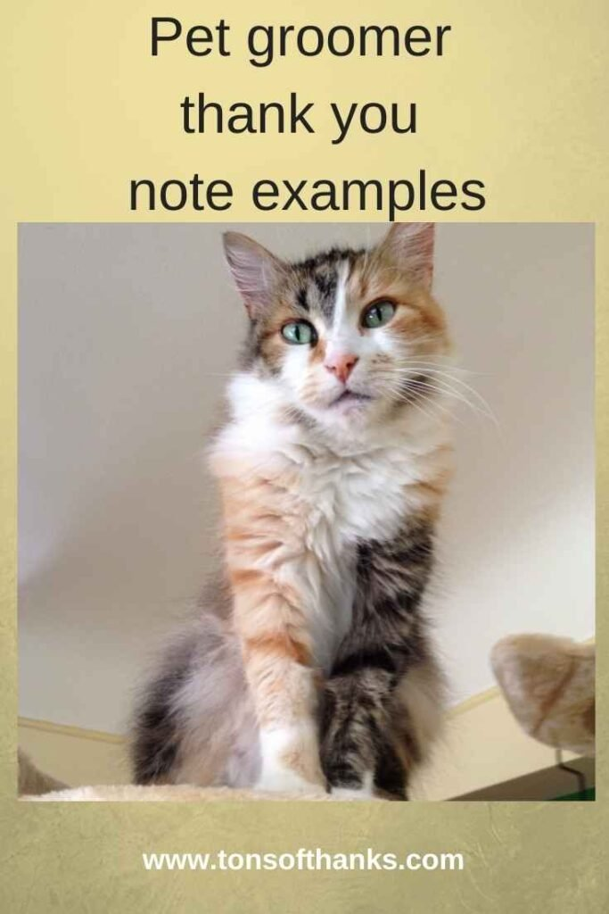 """Calico cat photo with text """"pet groomer thank you note examples"""" at the top"""