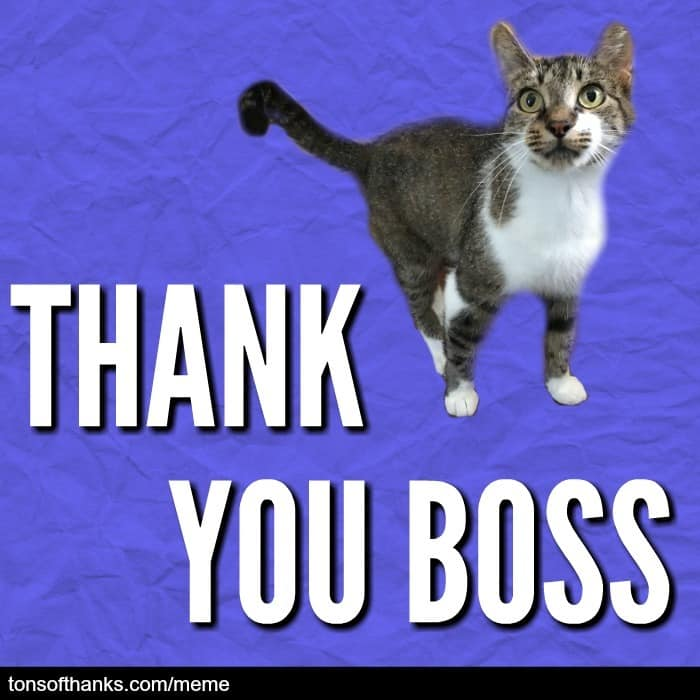 thank you boss cat meme