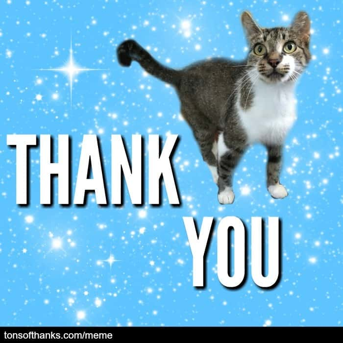 thank you cat mem