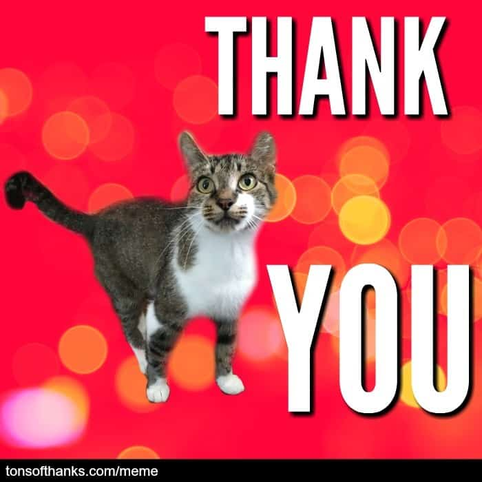 thank you cat meme