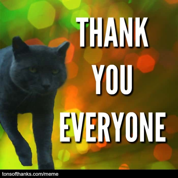 thank you everyone cat meme