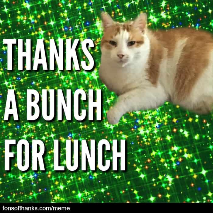thanks a bunch for lunch cat meme