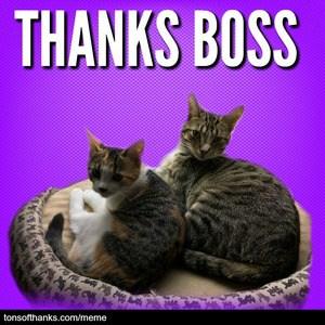 thanks boss cat meme