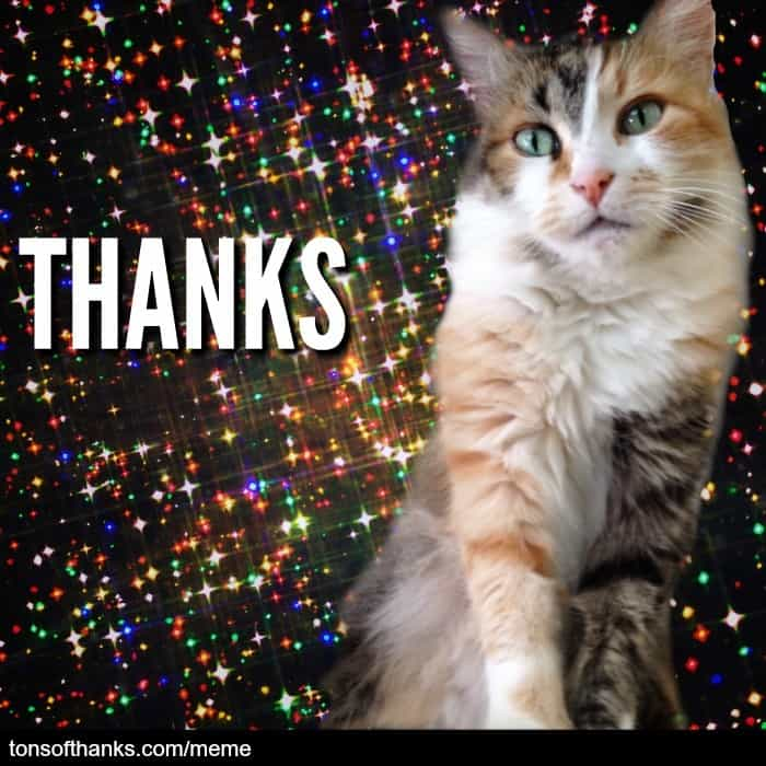 thanks cat meme
