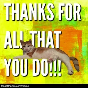 thanks for all that you do cat meme