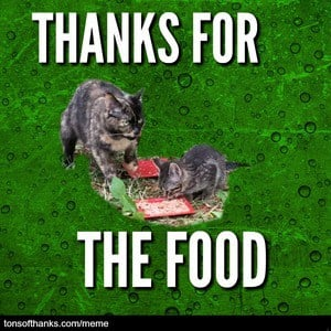 thanks for the food cat meme