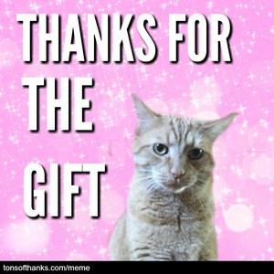thanks for the gift cat meme