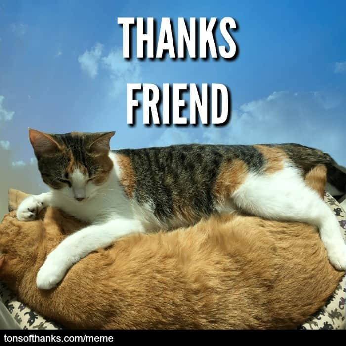 thanks friend cat meme